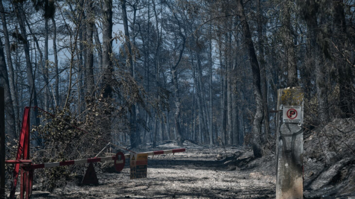 Καταστροφή: 10.000 τόνοι πευκόμελου χαμένοι και 9.000 μελισσοσμήνη καμένα
