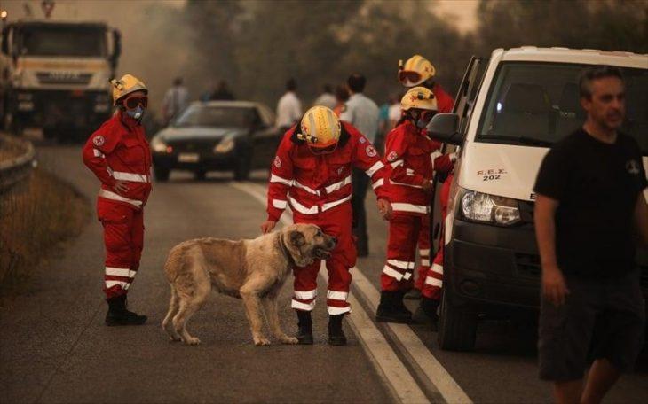 Ήρωας της Βαρυμπόμπης: Ο εθελοντής ντελιβεράς που πάλεψε με τις φλόγες για να βοηθήσει πυροσβέστες και πυρόπληκτους