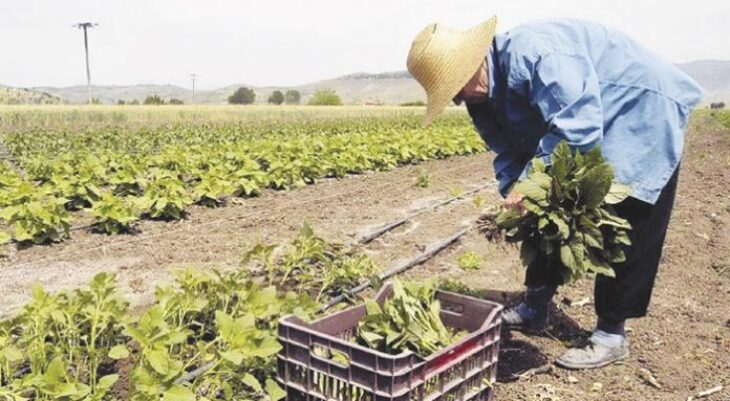 Πρώτη φορά νέοι Έλληνες στα χωράφια για δουλειά, μετά από 30 χρόνια – Οι Αλβανοί φεύγουν, οι ντόπιοι έρχονται