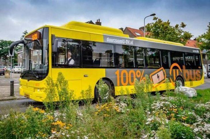 Ολλανδία: Κήποι για τις μέλισσες, έγιναν οι στάσεις των λεωφορείων