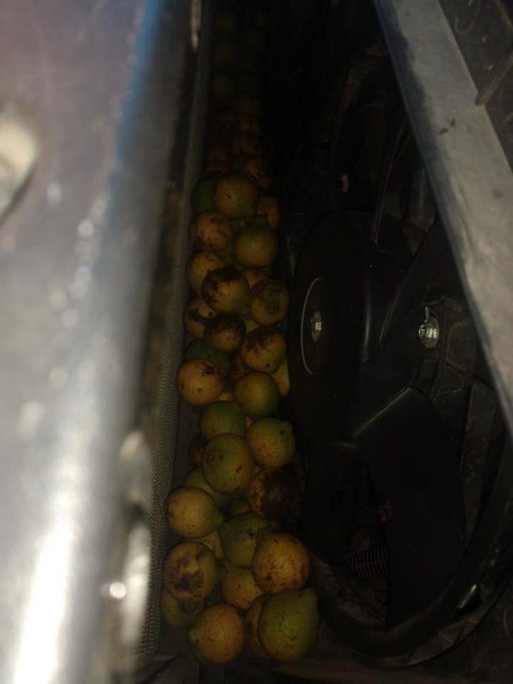 Απίστευτο: Σκίουρος αποθήκευσε σε αγροτικό 160 κιλά καρύδια σε τέσσερις μέρες
